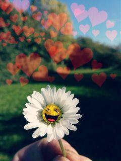 freetoedit daisy stickers emotions happiness