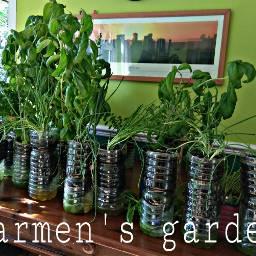 freetoedit garden indoorgarden botles recycle