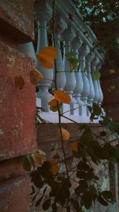freetoedit leaves bricks outdoors took outdoors
