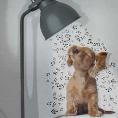 madewithpicsart dailystickerremix music light dog freetoedit
