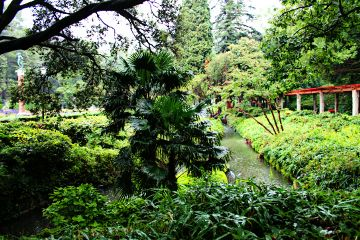 garden nature green