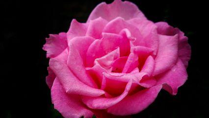 flower rose wildrose photography closeup