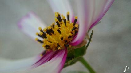 colorful macrophone flower