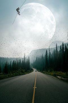 freetoedit fog nature trees road
