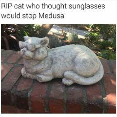 tumblr post meme notmine