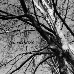 blackandwhite autumn tree fall falltime