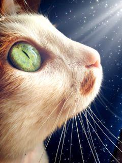 freetoedit cat eyes focus eye