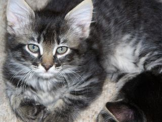 petsandanimals cat cute catlove photography