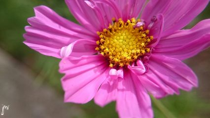 photography macrophon flower