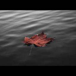 freetoedit colorsplash retro blackandwhite autumn