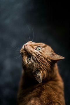 freetoedit angrycats