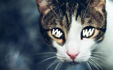 freetoedit cat line cateyes