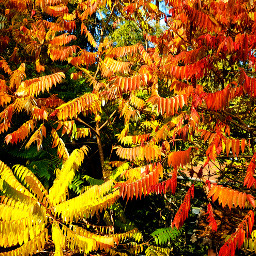 freetoedit fall autumn red orange