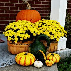 photography nature colorful season autumn