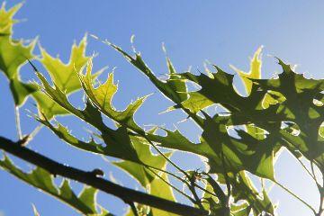 leaves nature light bluesky simplequietlove