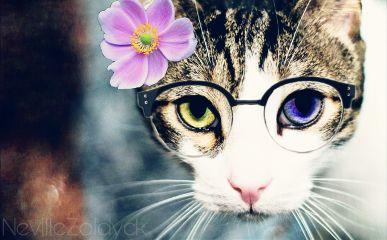 freetoedit remixed cat catsofpicsart catsphotography