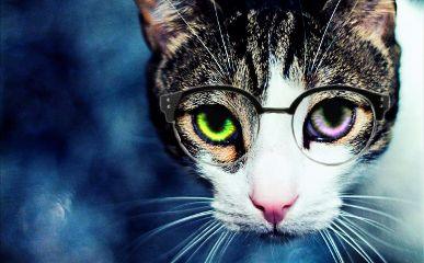 freetoedit catseyes eyes cat glasses