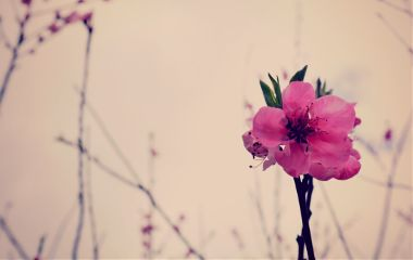 photography flower macro