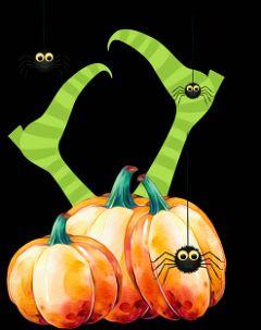 halloween witch pumpkins spiders