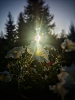 freetoedit photography colorful flower macro