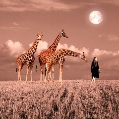 freetoedit giraffe scape jirafa animals