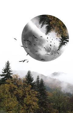 edited doubleexposure forest moon birds freetoedit