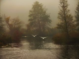 freetoedit fog morning autumn river