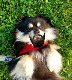 nobearddaystickerremix dailyremixmechallenge dailyremix dog freetoedit