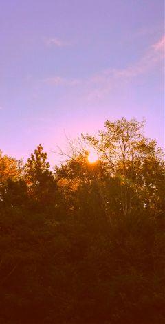 freetoedit myphoto sunrise naturephotography trees