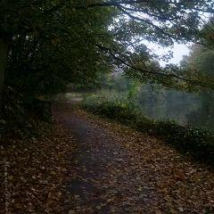 freetoedit autumn tree river water