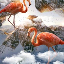 freetoedit nature mountain photography flamingos