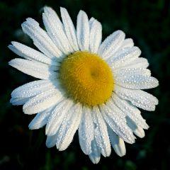 photography nature flowers colorful season freetoedit