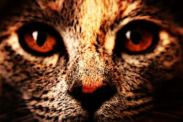 photography cat kitten cute passion freetoedit