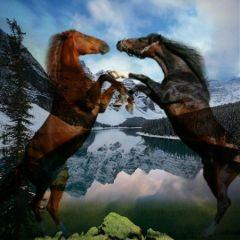 freetoedit petsandanimals animals horses mountains