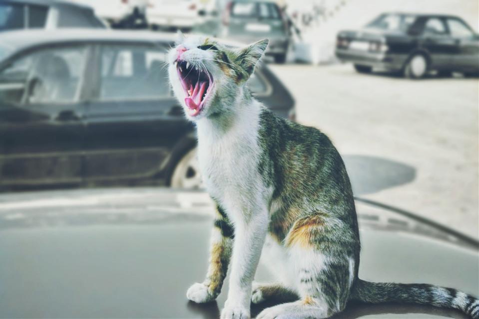 #cats #montenegro #summer #pets & animals