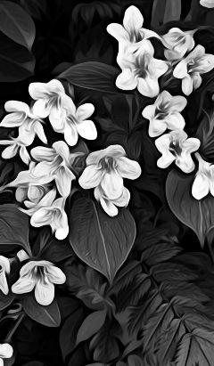 freetoedit flowers myphotography black
