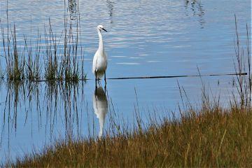 freetoedit nature pond