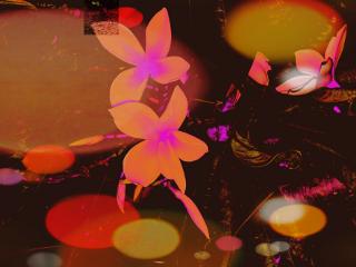 freetoedit myflowerphotography myedit flowers tangerine