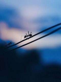 macro naturephotography nature naturelovers ant