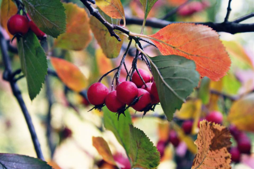 Autumn days are the best🍁 #picoftheday #photography #fall #autumn #colorful #flowers #leaf #travel #traveler #love #liveit #traveltheworld #park #sunnydays