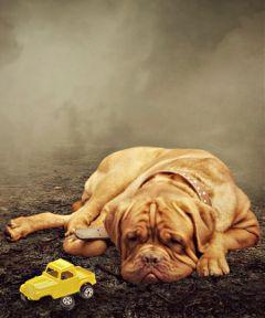 sad emotions dog myart madewithpicsart