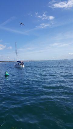freetoedit sea sailing blue sky