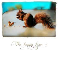 squirrel peanuts quotesandsayings