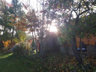 freetoedit goodmorning autumn mygarden