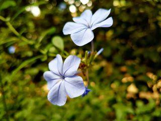 photography flowers nature naturephotography emotions freetoedit