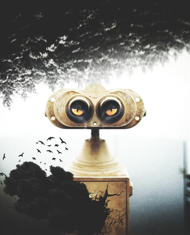 #blackandwhite#eye#birds#hdr