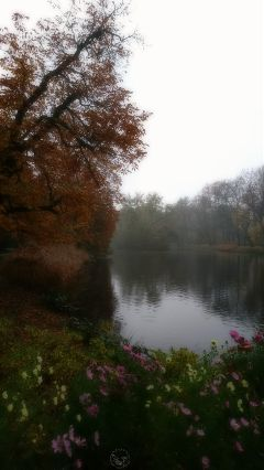 freetoedit autumn lake fog park