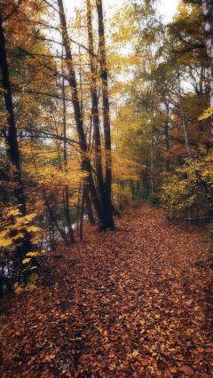 freetoedit autumn road woodland leafs