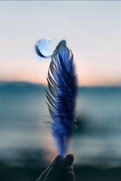 free freetoedit feather