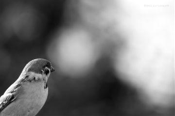 deeliriouss blackandwhite nature photography bird